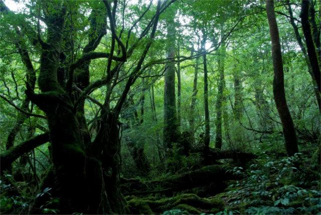 木の香りの秘密